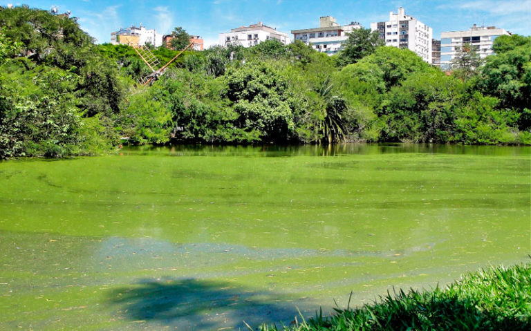Controle de algas